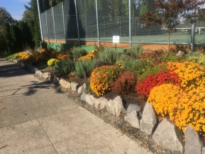 2016 flower bed fall