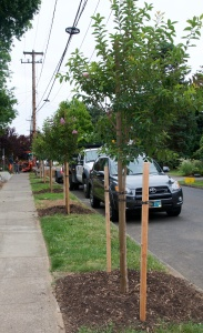2016 new trees83