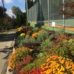 2017 flower bed